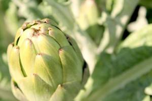 Spain: Artichokes presented as food attraction