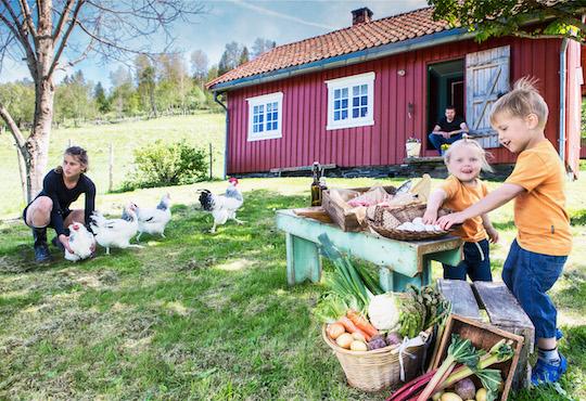 Trøndersk Food Festival's innovative response to gathering restrictions